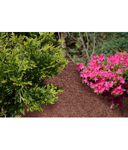 Decorative brown WOOD CHIPS