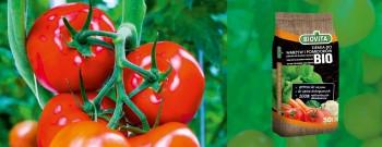 Ziemia do warzyw i pomidorów BIO
